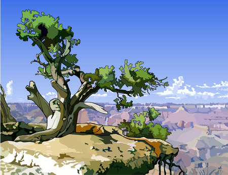 canyon: tree on a rocky ledge above the canyon