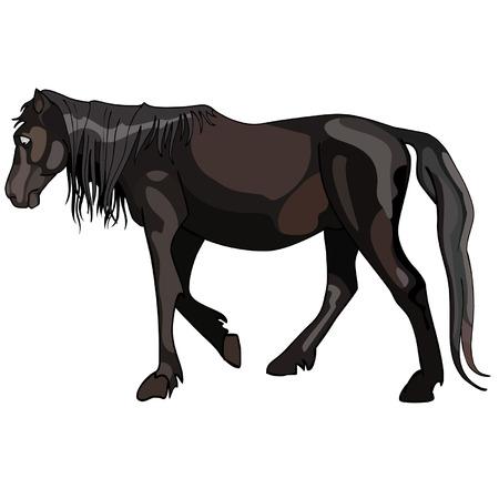 dark horse walks pensively