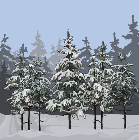 winter forest: Winter forest with fir trees