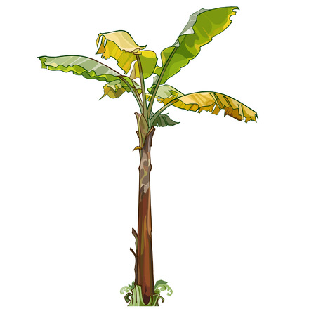 palm banana tree with yellow leaves