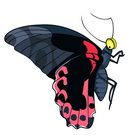 papilio: Butterfly black and red, papilio rumanzovia Illustration