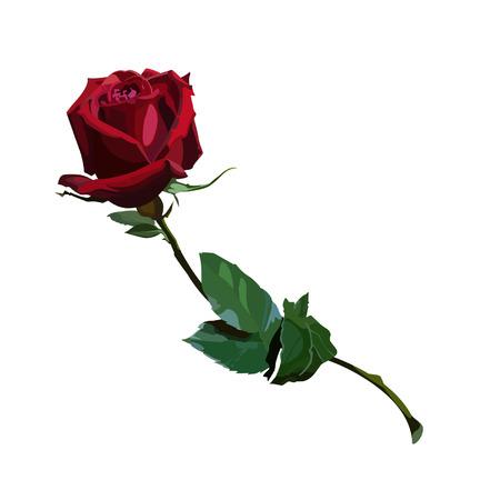 Rose rouge Banque d'images - 36312144