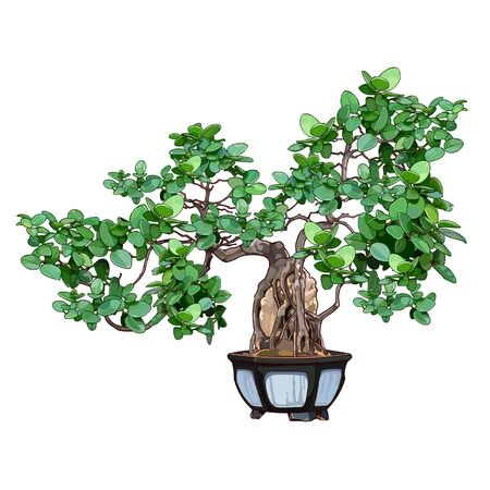 Bonsai boom in een pot Stockfoto - 36312378