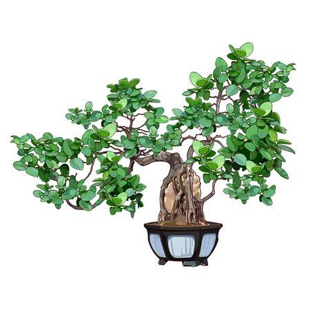 bonsai tree: bonsai tree in a pot