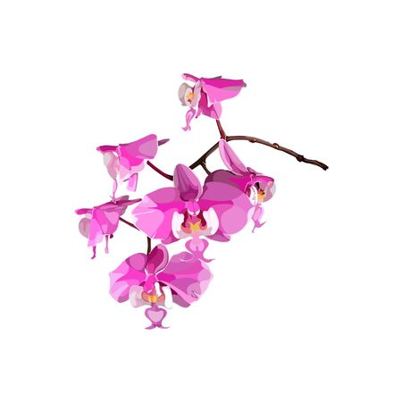pink orchid: pink orchid flower