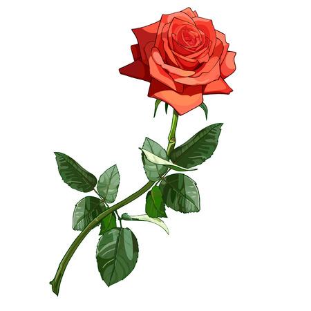 rosa roja de lujo