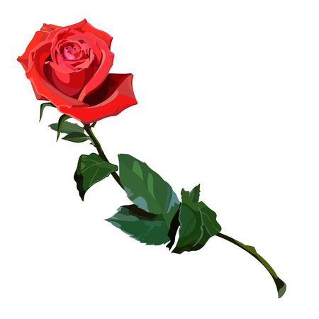 scarlet: rose scarlet