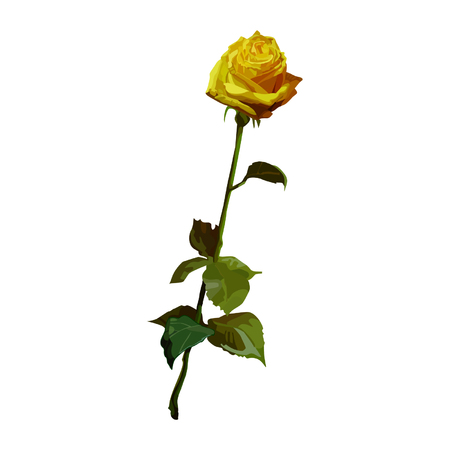 Rose jaune Banque d'images - 36312578