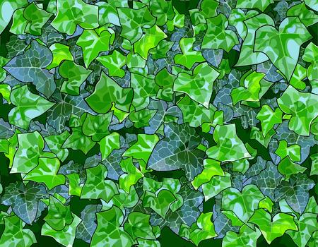 sorrel: background of green leaves Illustration