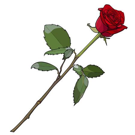 Blume Rose rot