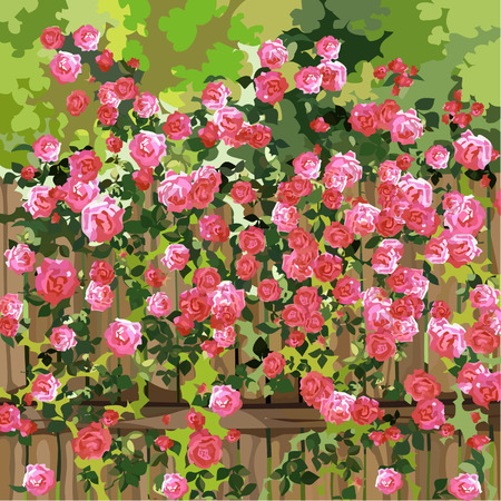 shrub: shrub with pink flowers over a fence