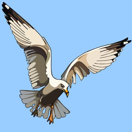 white bird: white bird seagull in flight