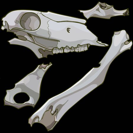 fragments: skull fragments and animal bones