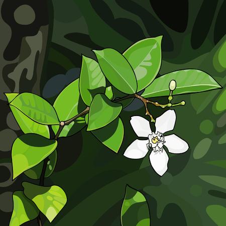 tropical plant: Blanca flor de una planta tropical Vectores