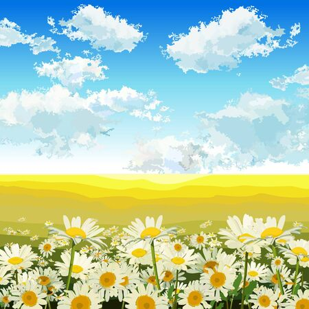 field of daisies: endless yellow field with daisies Illustration
