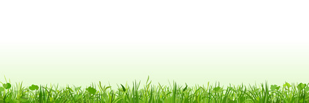 beautiful summer growth: row of green grass