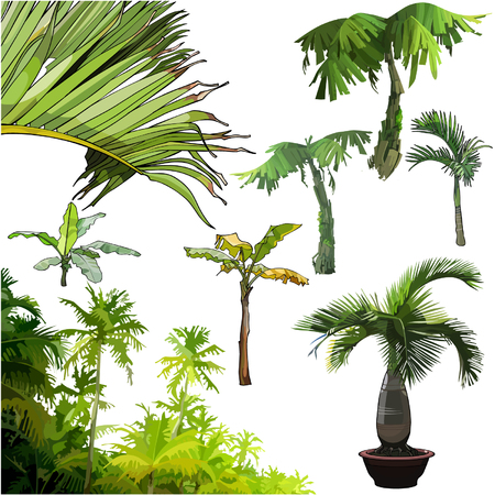 palmetto: set of different palm trees