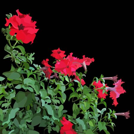 petunia: petunia plant with red flowers
