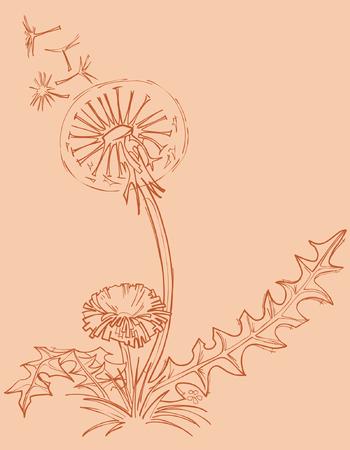 dessin au trait: pissenlit contour dessin