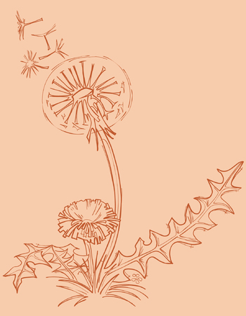 outline drawing: tarassaco contorno disegno Vettoriali