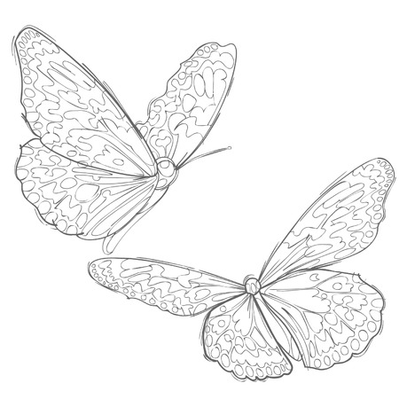 two: contour drawing two butterflies