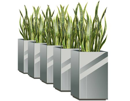 row: row of pots with green plant sansevieria Illustration