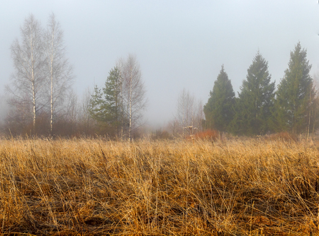 early spring snow: Forest glade with an old grass and the remains of snow in the early spring and in the foggy morning.