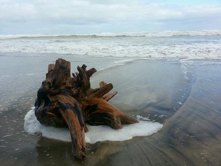onto: Stump washed up onto beach
