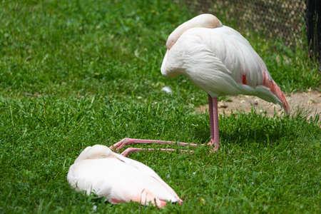 Flamingos at Askhania Nova, Kherson, Ukraine