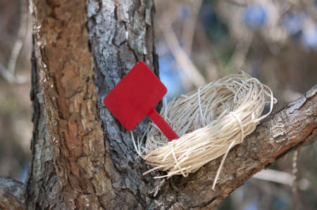 tree works: Nest in Tree with Blank Sign for you to add text.  Works well with for sale, for rent, welcome home, empty nest, etc. Stock Photo
