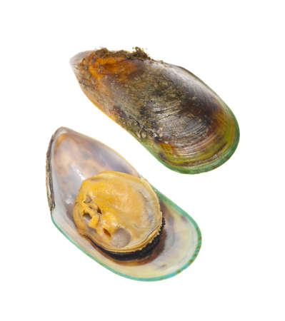 New Zealand greenshell mussel isolated on a white background.  The top and inside of the shell are shown.  This species of mussel gets its name from the green color at the tip of the shell.  Banco de Imagens