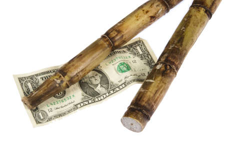 saccharum: Two stalks of sugar cane (saccharum) and an american dollar bill symbolize the cost of sugar. Studio shot on a white background.