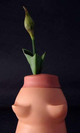 아직 꽃이 피지 않은 꽃은 극적인 조명이있는 검은 색 바탕에 플라스틱 돼지 저금통에서 자랍니다. 돼지 저금통에 돈을 저축하면 성장을 촉진하고 결