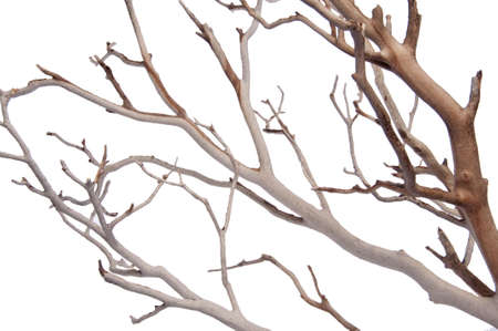 sandblasted: Manzantia Decorative Tree Branches Isolated on white with a clipping path.