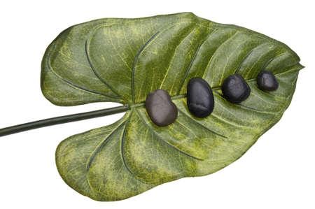 Zen Stones on a Tropical Leaf. Zdjęcie Seryjne