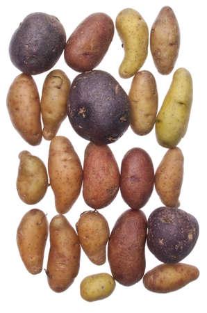 fingerling: Fingerling Artisan Heritage Potatoes Background Image. Stock Photo