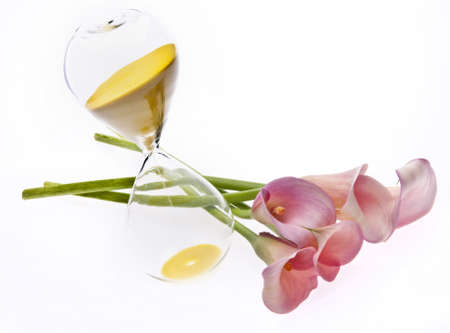 Radiant Pink Calla Lily Background with Hourglass.