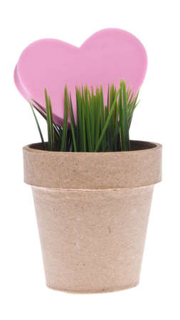 Love Growing Concept with Grass and a Pink Heart Isolated on White. Stock Photo - 7373164
