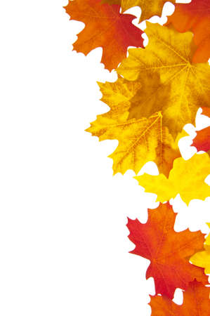 Autumn Leaves Perfect for Borders and Backgrounds. photo