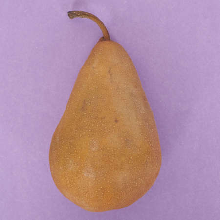 Fresh Healthy Pear Fruit on Vibrant Purple. Stock Photo - 8135216