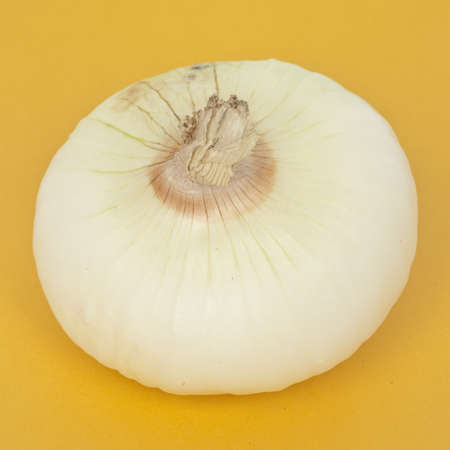 White Onion Stock Photo - 8135204