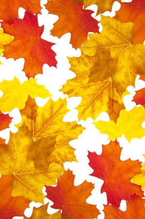 Autumn Leaves Achtergrond met levendige oranje en gele tinten.