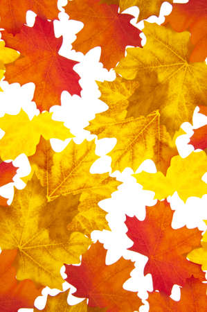 Autumn Leaves Background with Vibrant Orange and Yellow Hues. photo
