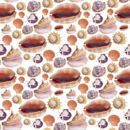 Sea Shell Seamless Background Pattern Photograph on White. photo