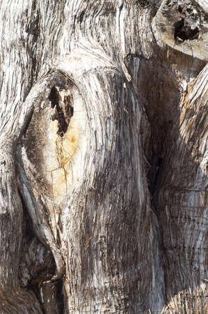 crete paper tree stumps soft pink tissue paper texture background image stock photo