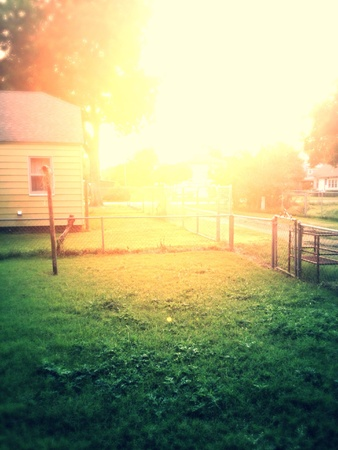 緑の草の上夕日