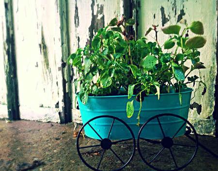 Regenachtige dag bloemen Stockfoto