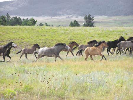 Spanish Mustang herd in Gallop Stock fotó - 241842