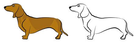 dachshund: Dachshund Illustration