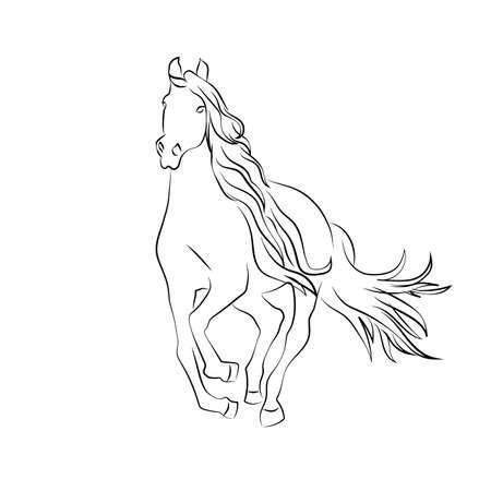foal: wild horse sketch